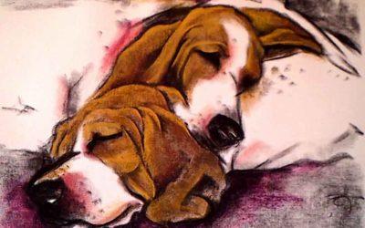 Sleeping Beagles